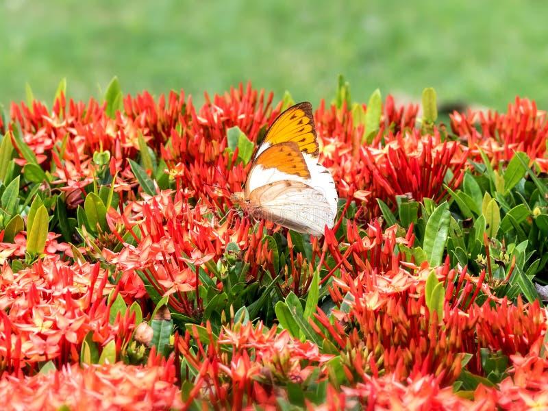 Schöne Schmetterlinge sitzen auf Blättern, indem sie schöne Flügel 02 verbreiten lizenzfreie stockfotografie