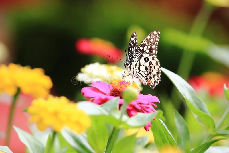 Schöne Schmetterlinge und Blumen stockfoto
