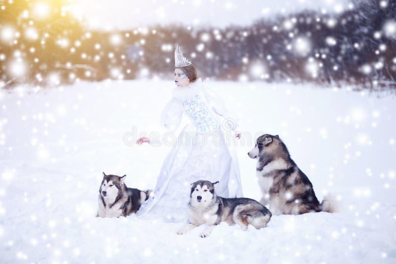 Schöne Schneekönigin witn Hunde Schlittenhunde oder Malamute Märchenmädchen Weihnachten lizenzfreies stockfoto