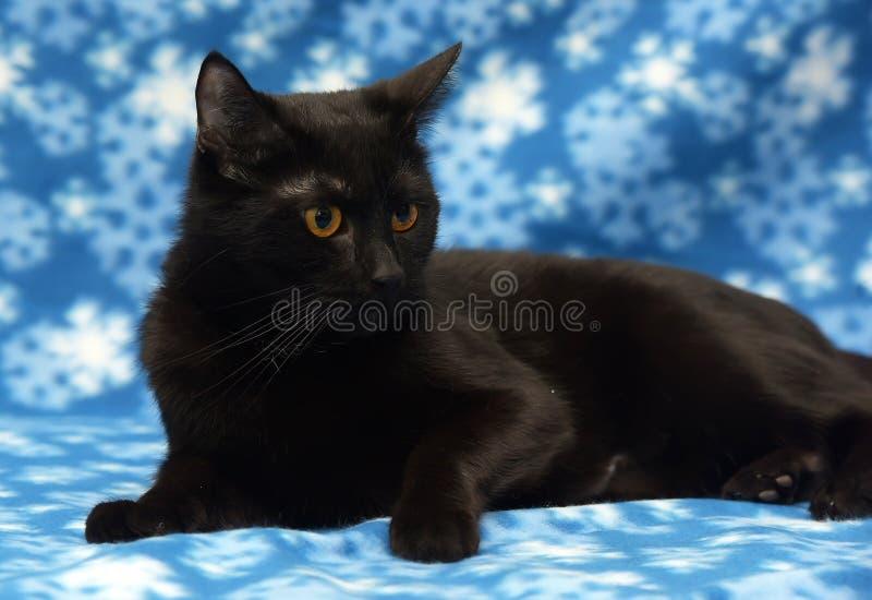 Schöne schwarze Katze mit bernsteinfarbigen Augen lizenzfreie stockfotos