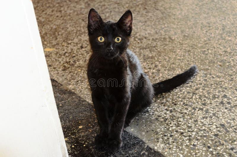 Schöne schwarze Katze mit gelben Augen stockfotografie