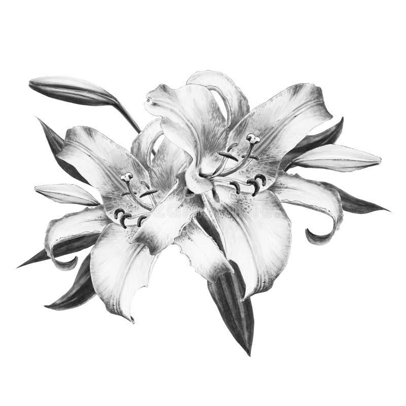 Schöne Schwarzweiss-Lilienzusammensetzung Blumenstrau? von Blumen Blumendruck Markierungszeichnung stockfotos