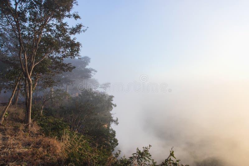 Schöne Sicht auf Nebel im Sonnenaufgang, Sisaket, Thailand lizenzfreie stockfotos