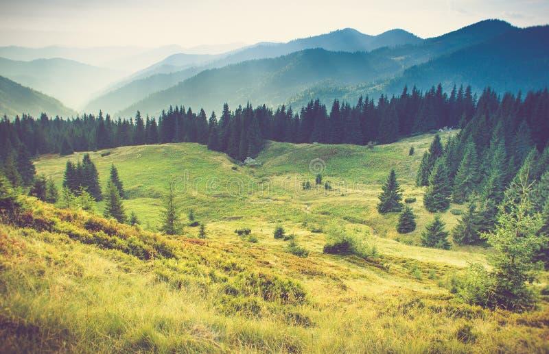 Schöne Sommerberglandschaft Touristische Zelte nähern sich Wald lizenzfreies stockfoto