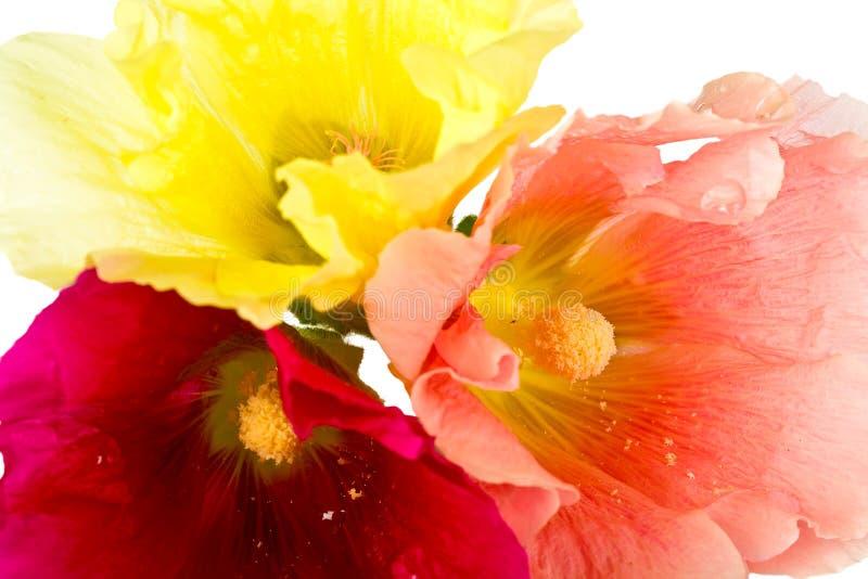 Schöne Sommerblumen stockfotografie