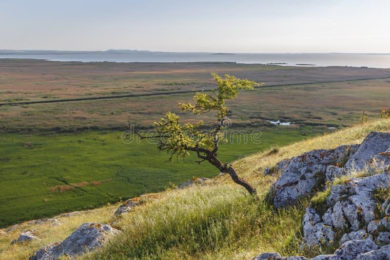 Schöne Sommerlandschaft in Dobrogea-Region, nahe Donau-Delta, Rumänien stockbilder