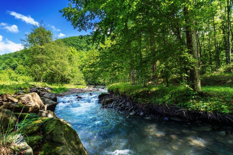 Schöne Sommerlandschaft durch den Waldfluß lizenzfreie stockfotos