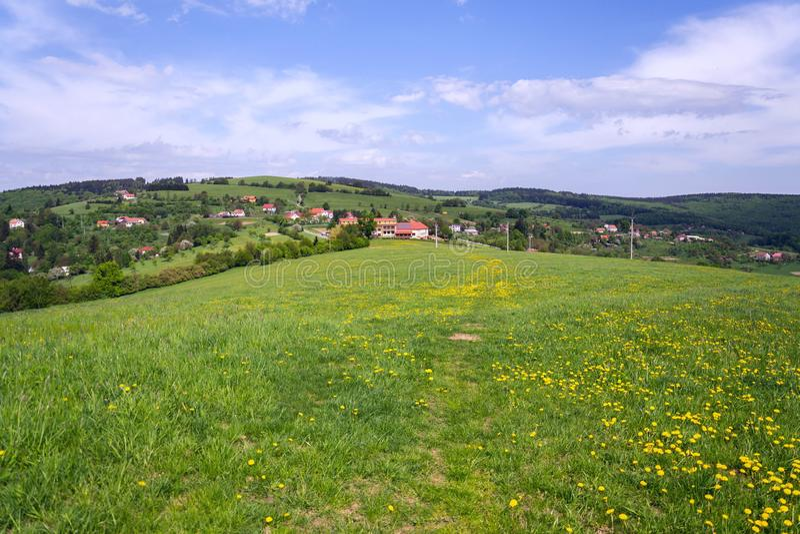 Schöne Sommerlandschaft mit blühendem gelbem Löwenzahn um Zitkova-Dorf, weiße Karpaten im Hintergrund lizenzfreie stockbilder