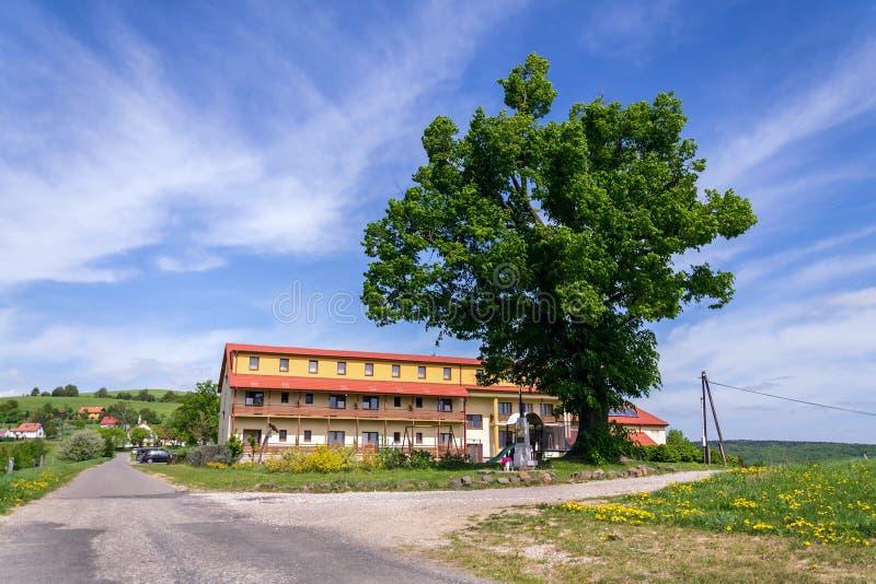 Schöne Sommerlandschaft mit blühendem gelbem Löwenzahn um Zitkova-Dorf, weiße Karpaten im Hintergrund lizenzfreies stockbild