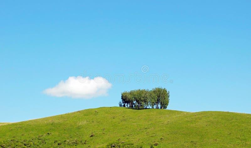 Schöne Sommerlandschaft mit einigen Bäumen auf die Oberseite eines Hügels und der einsamen weißen Wolke lizenzfreie stockbilder