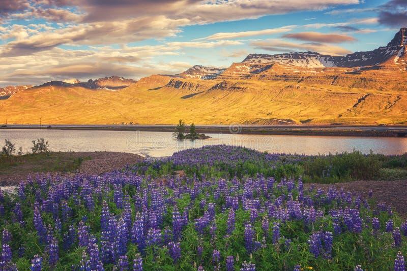 Schöne Sommerlandschaft, Sonnenuntergang über den Bergen und blühendes Tal, Island-Landschaft stockfoto