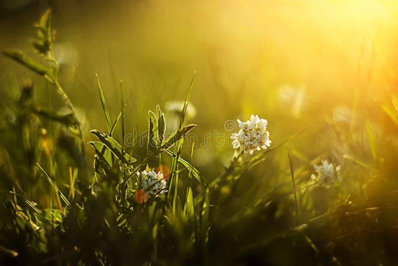 Schöne Sommerwiese lizenzfreies stockfoto