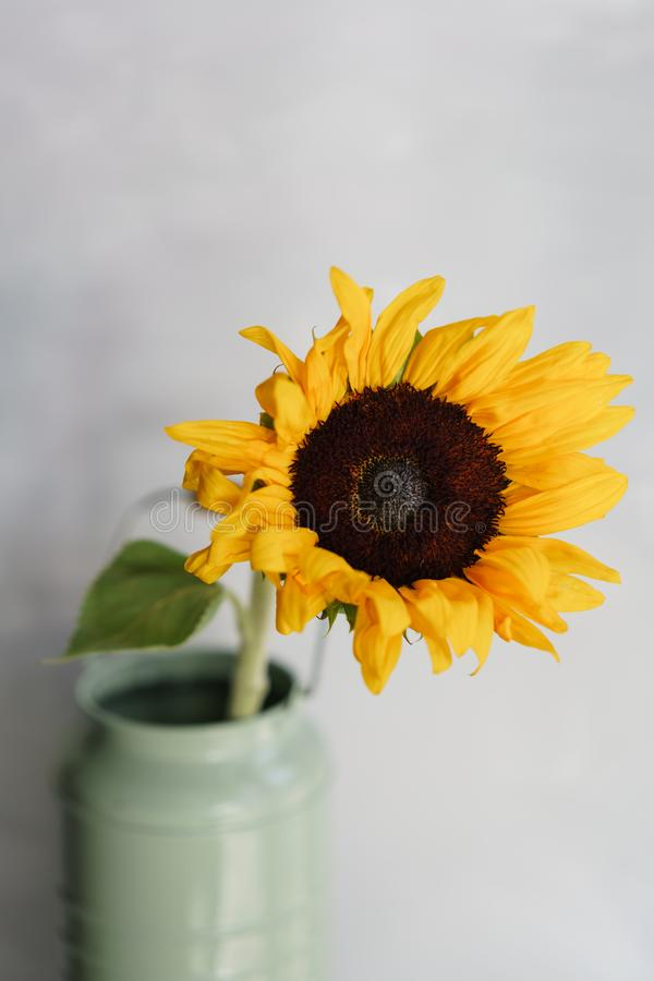 Schöne Sonnenblume blüht in einem Vase auf einer Tabelle Blumenstrauß der gelben Blume Dekoration des Hauses Tapete und lizenzfreies stockfoto