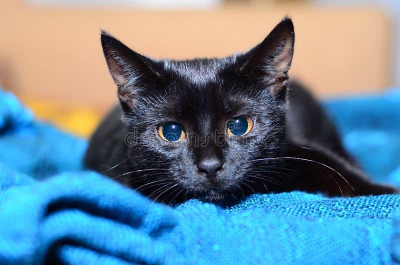 Schöne Spiele der schwarzen Katze stockfotos