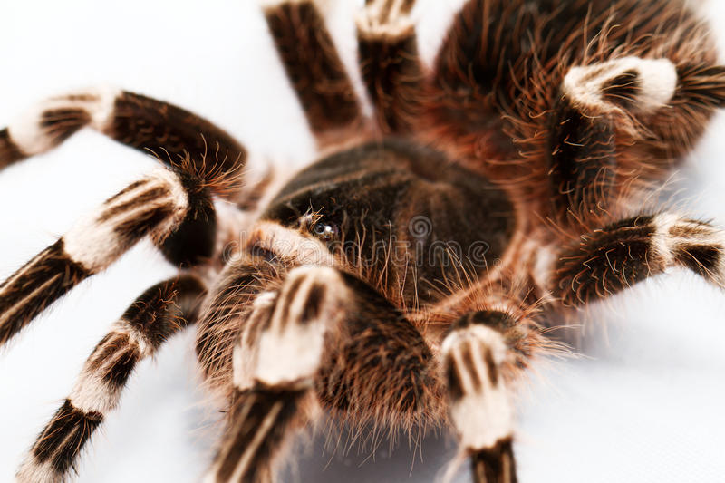Schöne Spinne lizenzfreie stockfotos