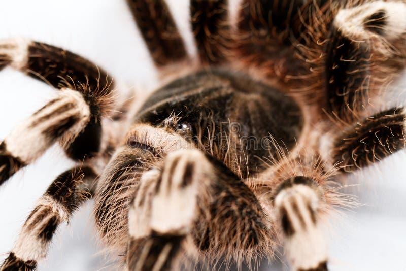 Schöne Spinne lizenzfreie stockfotografie