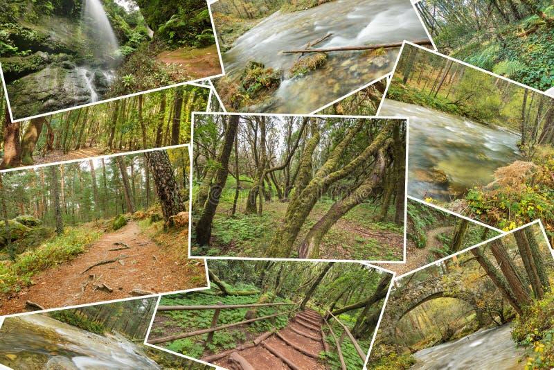 Schöne Stapelcollage von Regenwaldbildern Version 4 lizenzfreies stockfoto