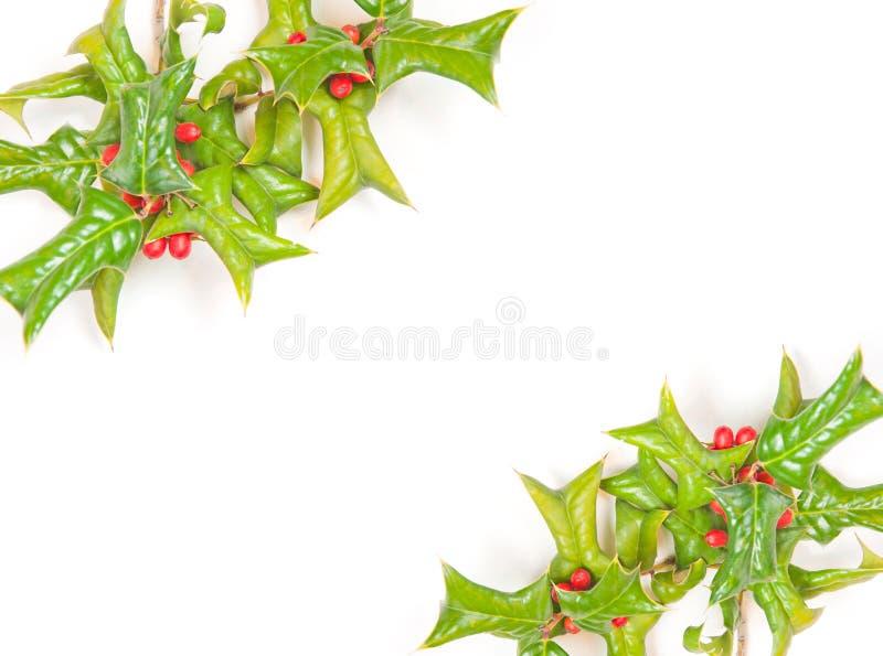 Schöne Stechpalmebeere dekorativ lizenzfreie stockfotos