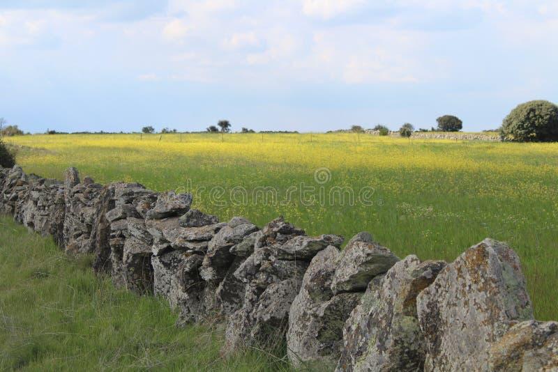 Schöne Steinwand, die die Felder und die Tiere trennt stockfotografie