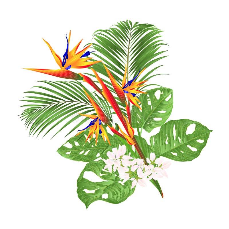 Schöne Strelitzia reginae tropische Blume und monstera und Palme auf der weißen Hintergrundweinlese-Vektorillustration editable stock abbildung