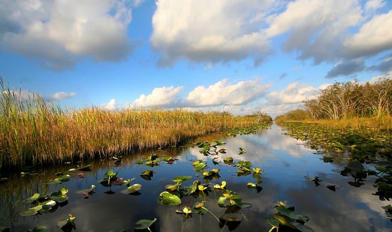 Schöne Sumpfgebiete lizenzfreie stockfotos