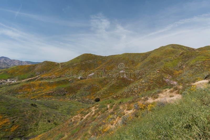 Schöne superbloom Aussicht in einem Gebirgszug nahe See Elsinore lizenzfreie stockbilder