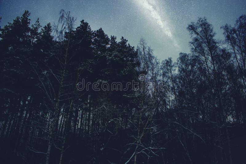 Schöne Suppengrün nachts gegen den blauen sternenklaren Himmel und die Milchstraße Nachtlandschaftshintergrund stockfoto