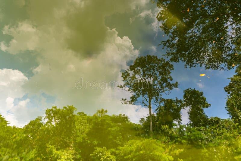 Schöne Szene des forrest und blauen Himmels mit Reflex auf Wasser-LAK stockfotografie