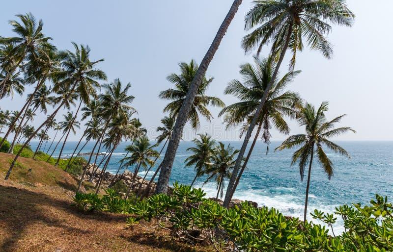 schöne szenische Ansicht der Küstenlinie mit Palmen, Sri Lanka, mirissa lizenzfreie stockfotografie