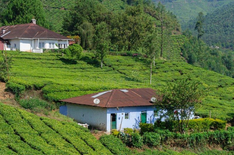 Schöne szenische Ansicht des Hauses auf dem Teegebiet im Berg nahe Munnar, Kerala, Indien lizenzfreie stockbilder