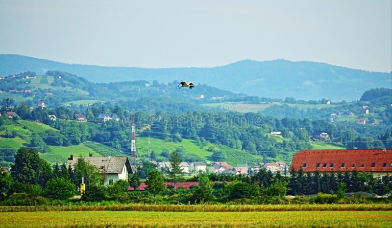 Schöne szenische Ansicht und Storch, die Slowenien Europa fliegt stockfotos
