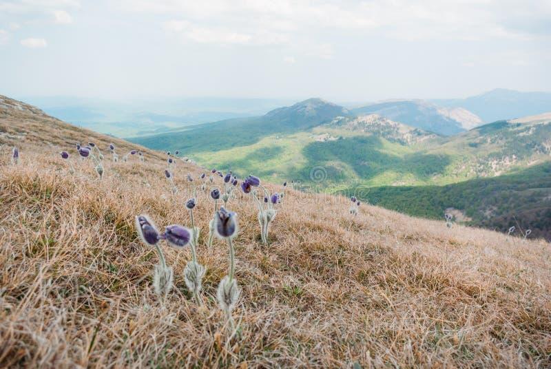 schöne szenische Ansicht von Frühlingsblumen und -bergen in Ukraine, Krim, stockfotografie
