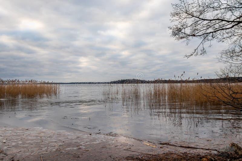 Schöne szenische ruhige Winterlandschaft des Eises, des Wassers und des Schilfs gegen einen bewölkten Himmel stockbild