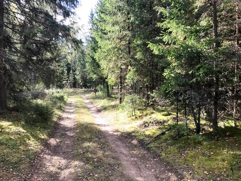 Schöne szenische Waldschotterstraße mit Furchen in einem Kiefernkriegers-Grünwald stockbild