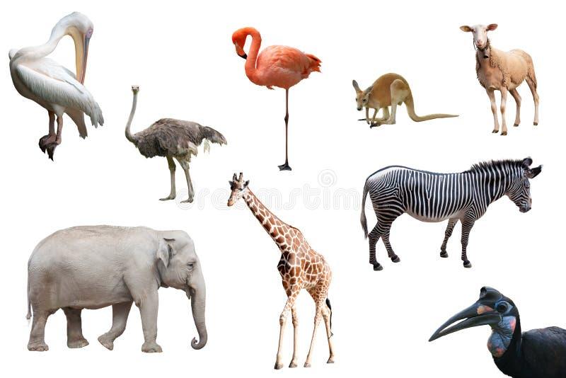 Schöne Tiere und Vögel lokalisiert lizenzfreie stockfotos