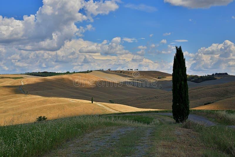 Schöne Toskana-Felder in San Quirico d 'Orcia lizenzfreies stockbild