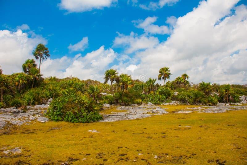 Schöne tropische mexikanische Landschaft mit Ansichten von Palmen Tulum, Maya Mexikos, Yucatan, Riviera lizenzfreie stockfotos