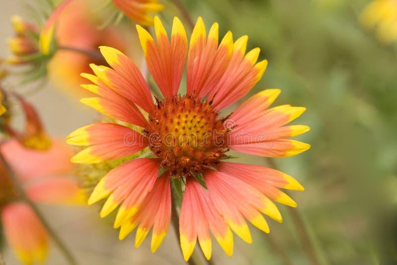 Schöne umfassende Blumen stockfotos