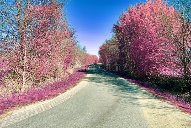 Schöne und bunte Fantasielandschaft in einer asiatischen purpurroten Infrarotfotoart stockbilder