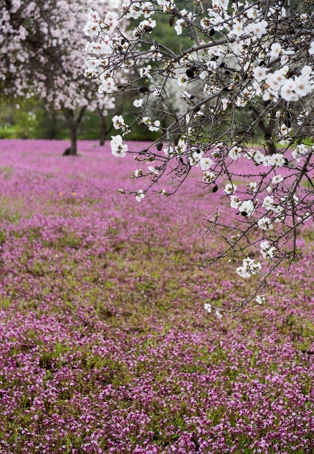 Schöne und bunte Landschaft des Frühlinges stockfotos
