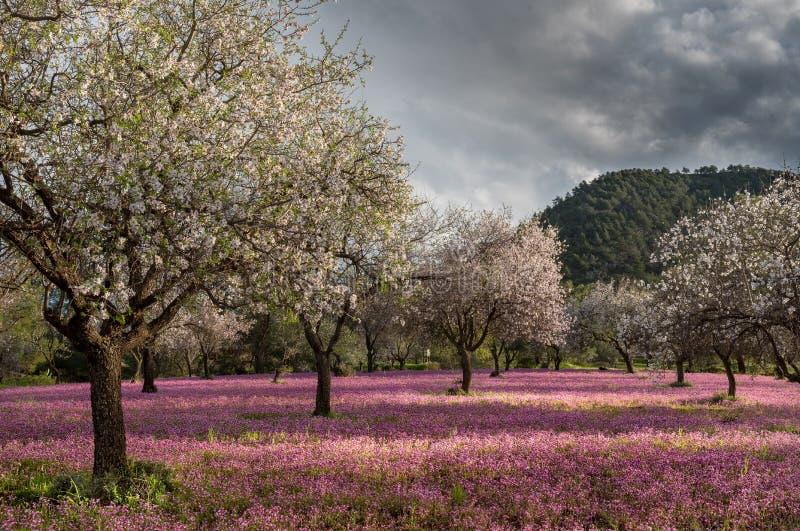 Schöne und bunte Landschaft des Frühlinges stockbild