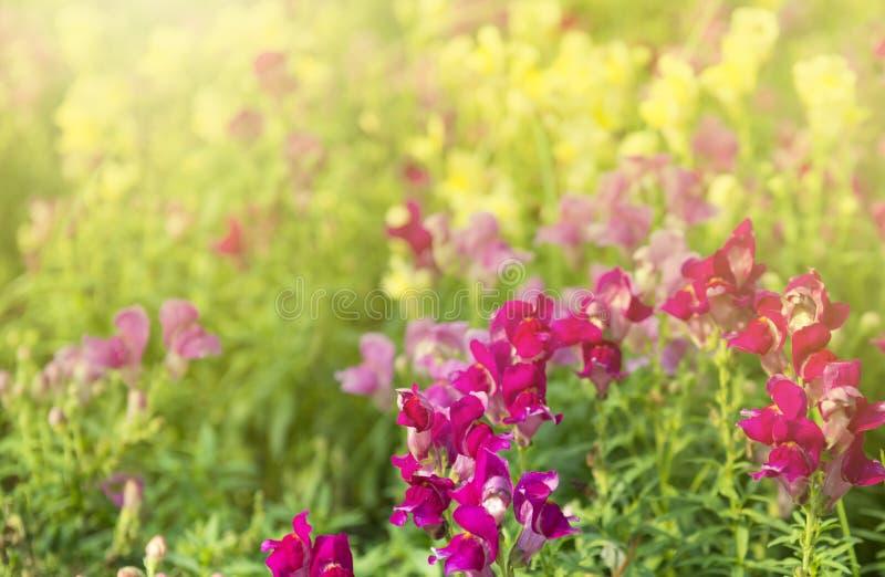 Schöne und mehrfarbige Blume im Park stockfotos