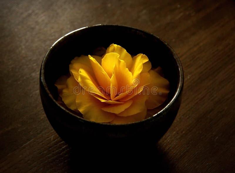 Schöne und wohlriechende Blume in einem Vase stockfotografie