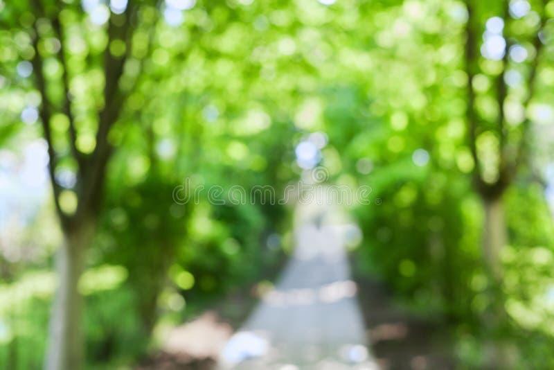Schöne unscharfe Sommerbäume und -weg im Park stockfotos