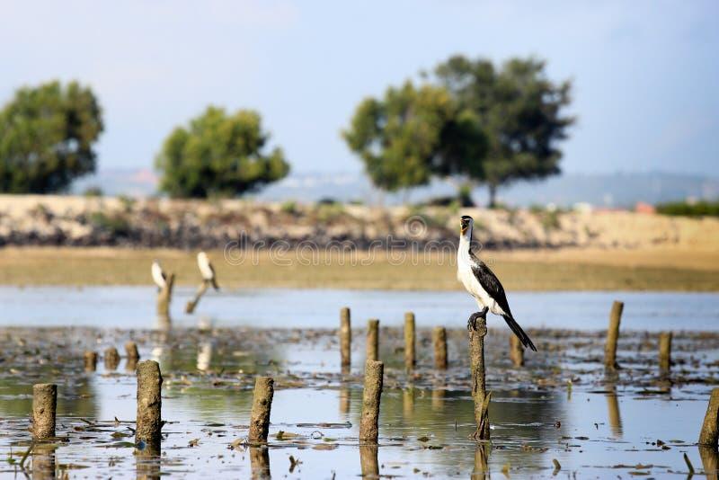 Schöne Vögel stockfotografie
