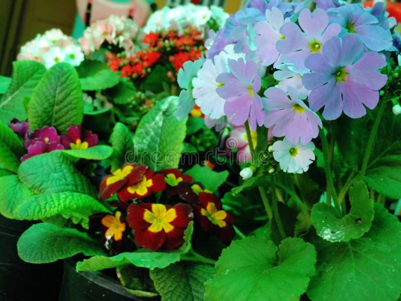 Schöne verschiedene Blumen stockfotos