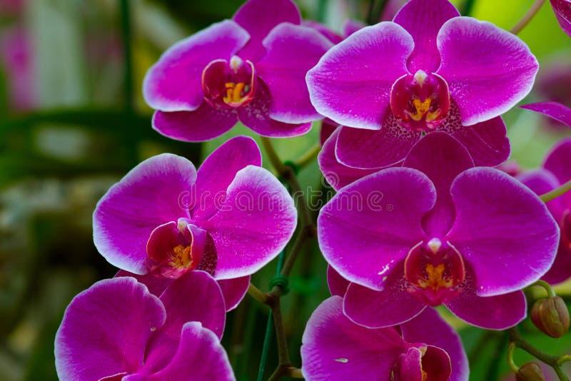 Schöne violette Orchideenblumen stockfotos