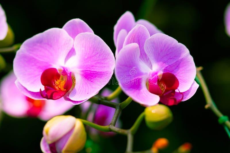 Schöne violette Orchideenblumen lizenzfreie stockfotos