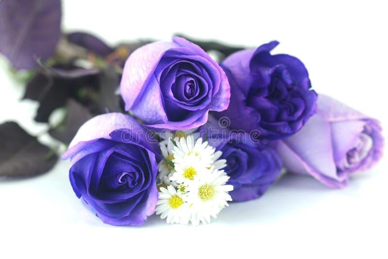 Schöne violette Rosen und Kamille lizenzfreie stockfotografie