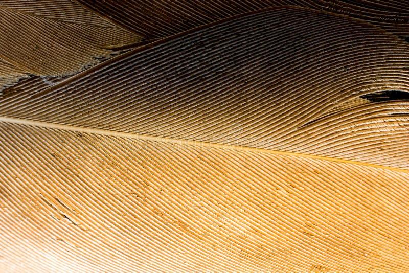 Schöne Vogelfedern für dekorative Ziele lizenzfreie stockbilder